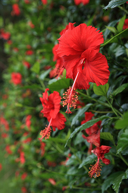10 loại hoa chịu nắng tốt trồng ban công hướng tây