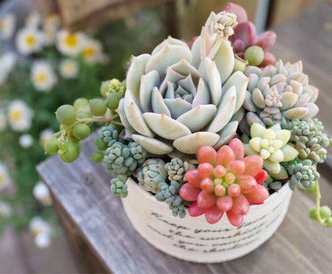 Phong thủy hoa sen đá