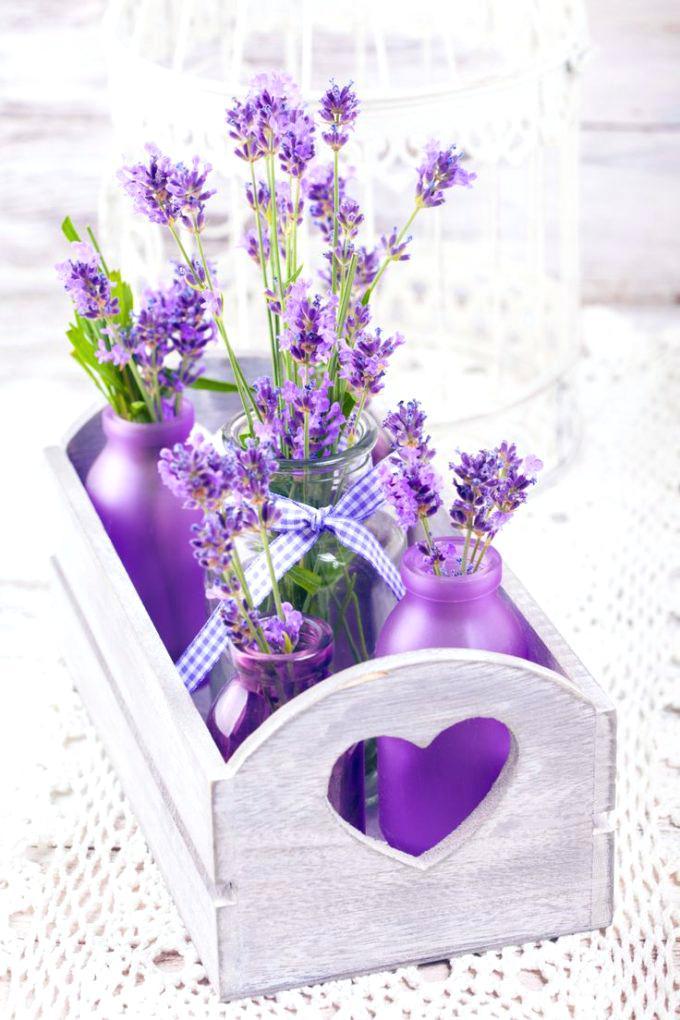 Hướng dẫn chi tiết các bước giâm cành hoa oải hương Lavender