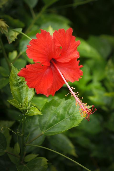 Màu đỏ là biểu tượng cho tình yêu và đam mê... Xem thêm
