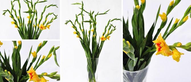 Mách bạn 7 bí quyết để có bình hoa lay ơn tươi lâu ngày tết