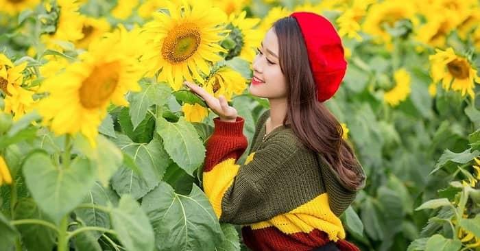 Đốn tim trước cánh đồng hoa hướng dương đẹp ngút ngàn