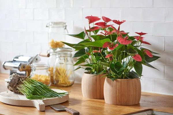 Top 5 chậu hoa ngày tết rước lộc vào nhà