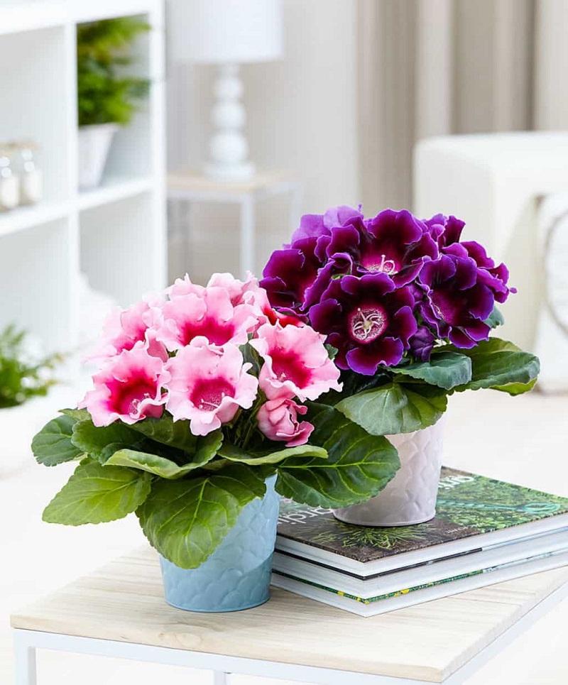 10 loại hoa màu tím đẹp nhất thế giới