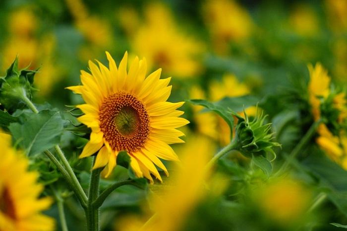 8 loại hoa phong thủy mang ý nghĩa thành công và may mắn