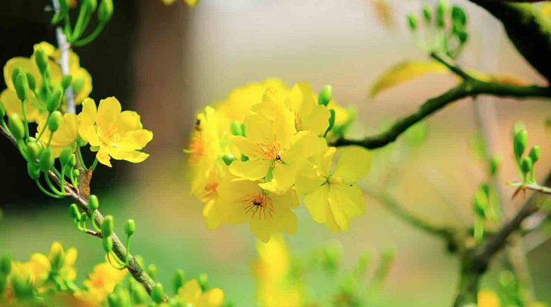 Hoa ngày tết và ý nghĩa phong thủy