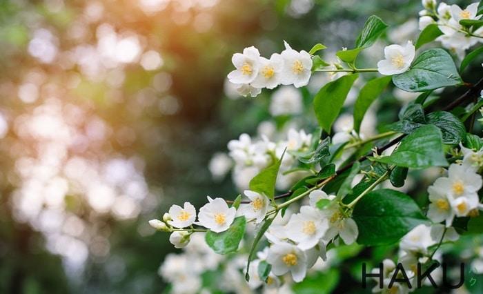 Top 8 loại Hoa ưa bóng râm trồng ban công ít nằng