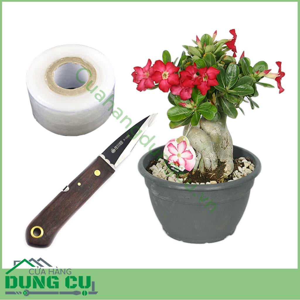 Bật mí 2 cách ghép cây hoa sứ nhanh ra hoa nở đep