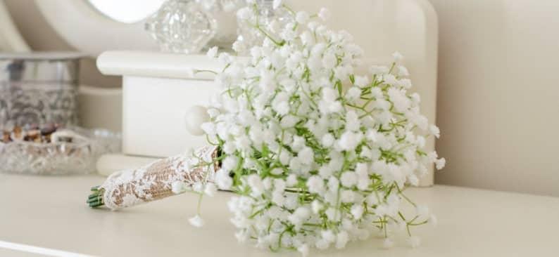 Khám phá nguồn gốc đặc điểm hoa baby