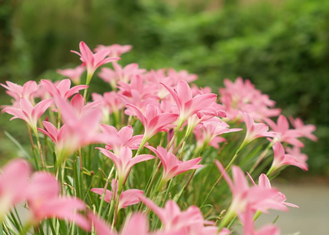 """Loài hoa này còn được gọi bằng một cái tên mỹ miều khác là """"Nàng công chúa của tự nhiên""""."""
