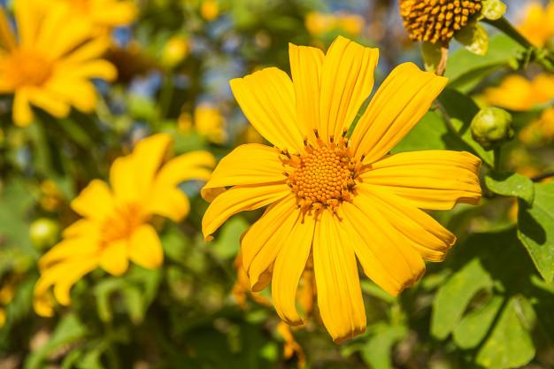 Hoa tháng 10 rực rỡ với sắc vàng trong nắng đẹp đến ngỡ ngàng