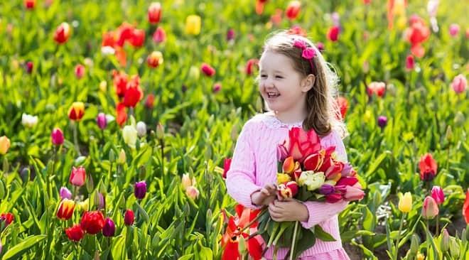 Sự tích hoa tulip mọc lên từ cô gái chạy trốn bất thành