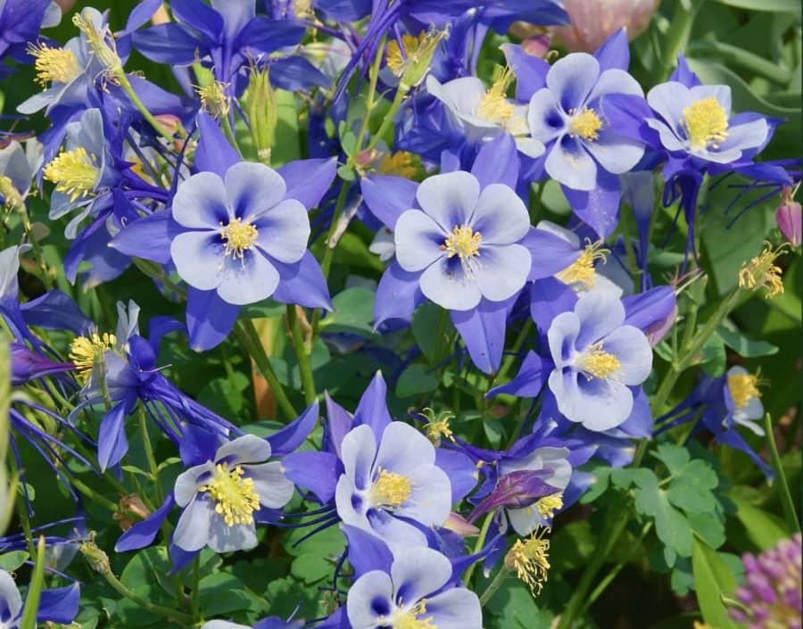 Sự tích và ý nghĩa hoa lâu đẩu biểu tượng cho Thánh thần