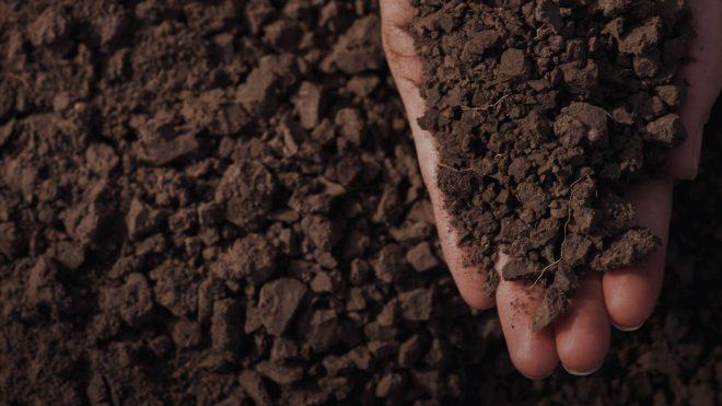 Bước 3: Xử lý đất trồng