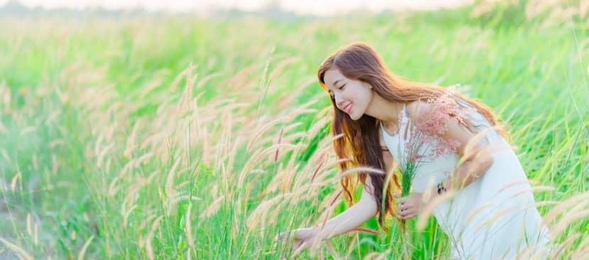Ý nghĩa hoa cỏ may một nỗi niềm đau trong tình yêu xa cách