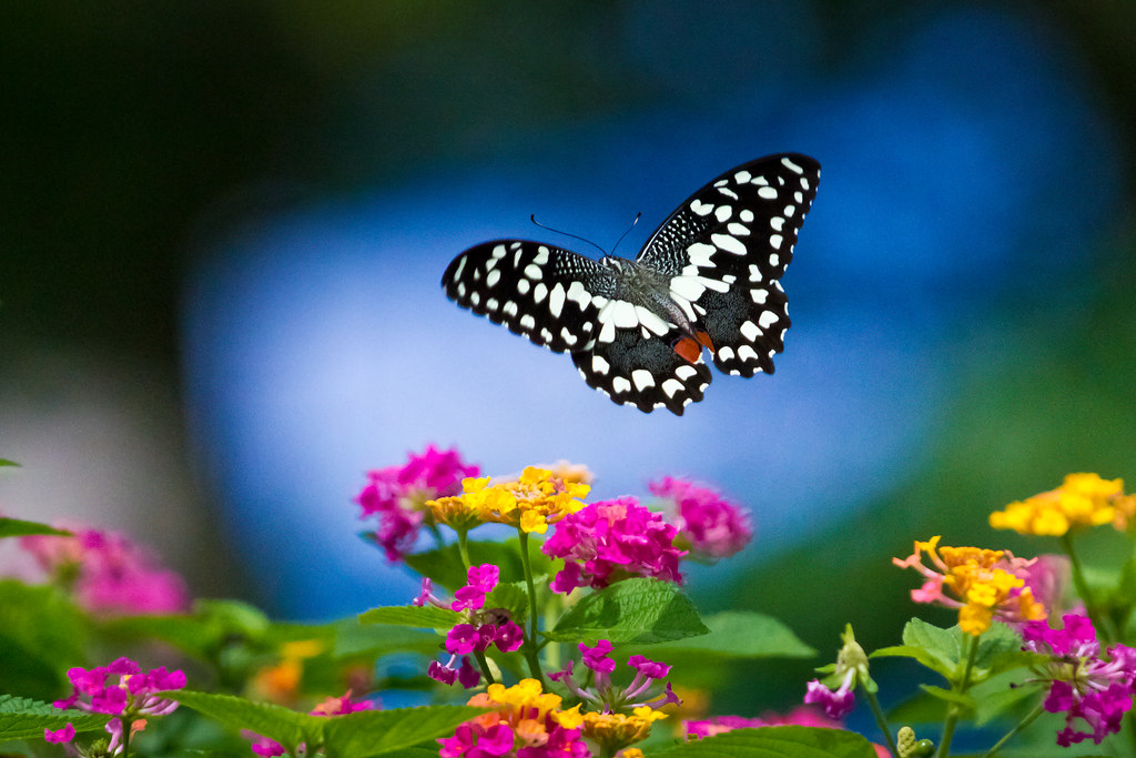 Vẻ đẹp muôn màu mà thiên nhiên ban tặng tạo nên bức tranh rực rỡ