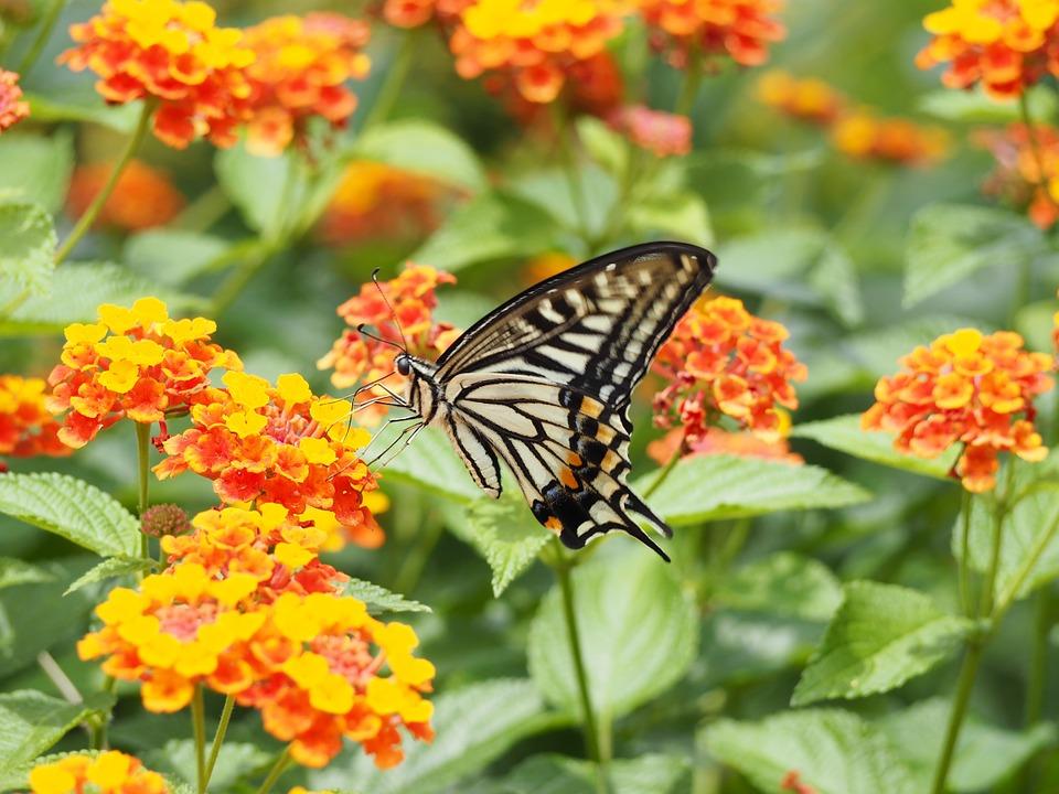 Loài hoa này đối với lũ trẻ miền quê như chúng tôi thân thương lắm, mộc mạc bình dị.