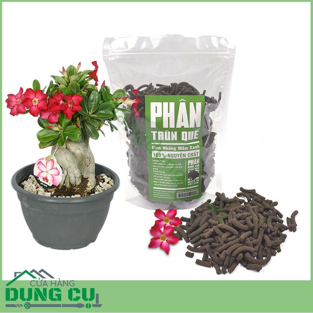 Chăm sóc nuôi trồng hoa sứ phát triển tốt bằng phân trùn quế nhiều chất dinh dưỡng
