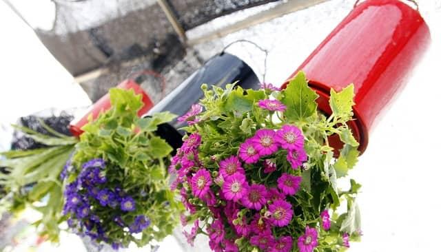 Giỏ hoa treo ngược thông minh độc đáo tạo ấn tượng cho ngôi nhà