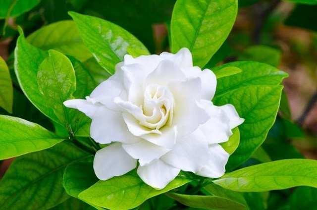 Hoa phong thủy cung Song ngư