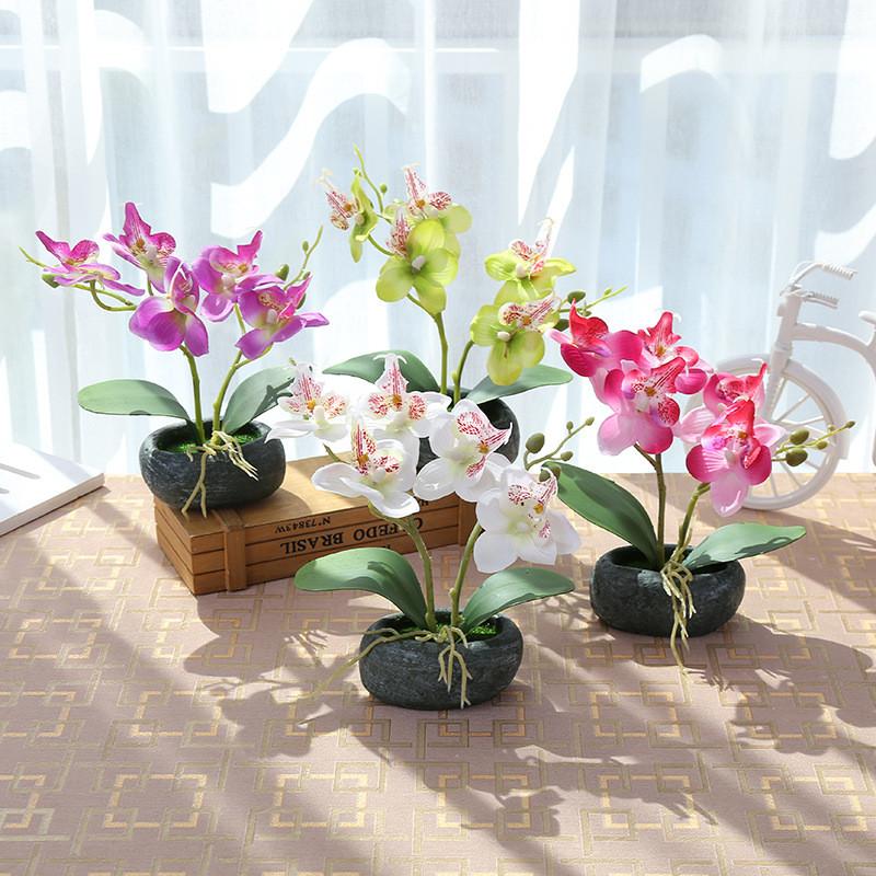 Chon màu sắc Hoa lan hợp Mệnh mang may mắn đến cuộc sống