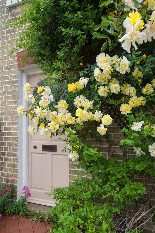 Mách bạn cách chọn hoa leo trồng trước nhà mang may mắn