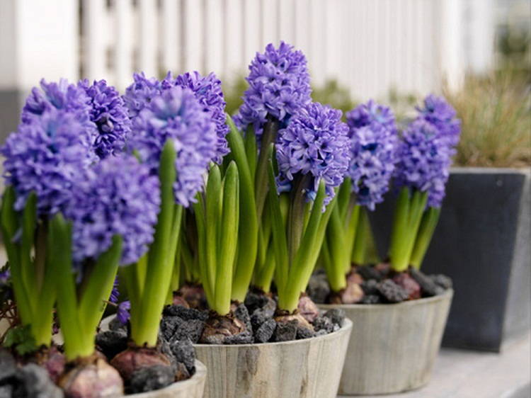 Cấm kỵ 3 loại hoa phá vỡ phong thủy kiêng bày trong nhà