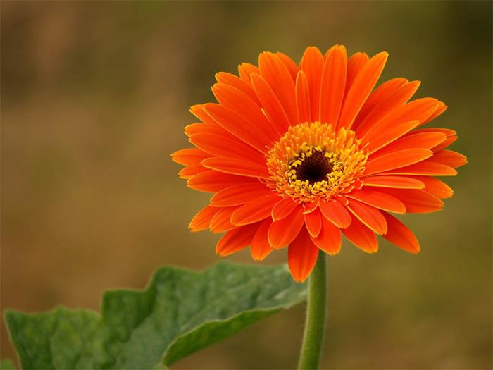 Top 8 loại hoa phong thủy đón tài lộc, bình an cho gia đình