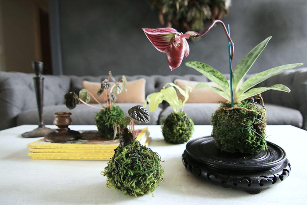 Hoa treo Kokedama phong cách Nhật Bản đẹp hút mắt