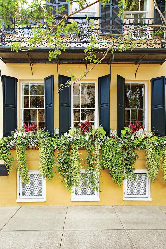 Tô điểm cho nhiều cửa sổ cạnh nhau bằng những hộp hoa treo