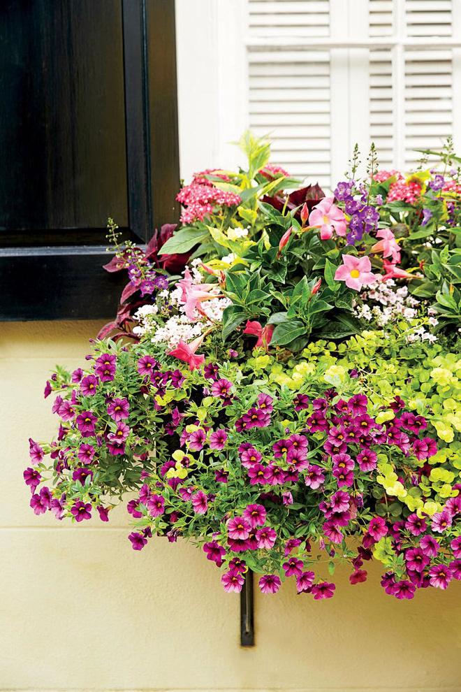 Cửa sổ trang trí ngập tràn sắc hoa