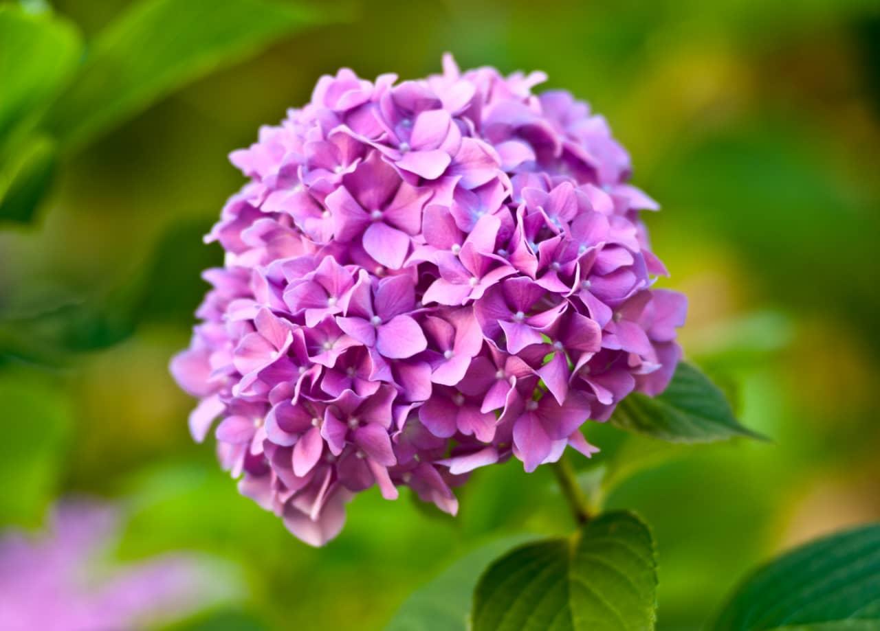 Hoa gồm nhiều bông hoa nhỏ ly ti có 4 cánh, có cuốn dài nối với nhau tạo thành một chùm hoa lớn