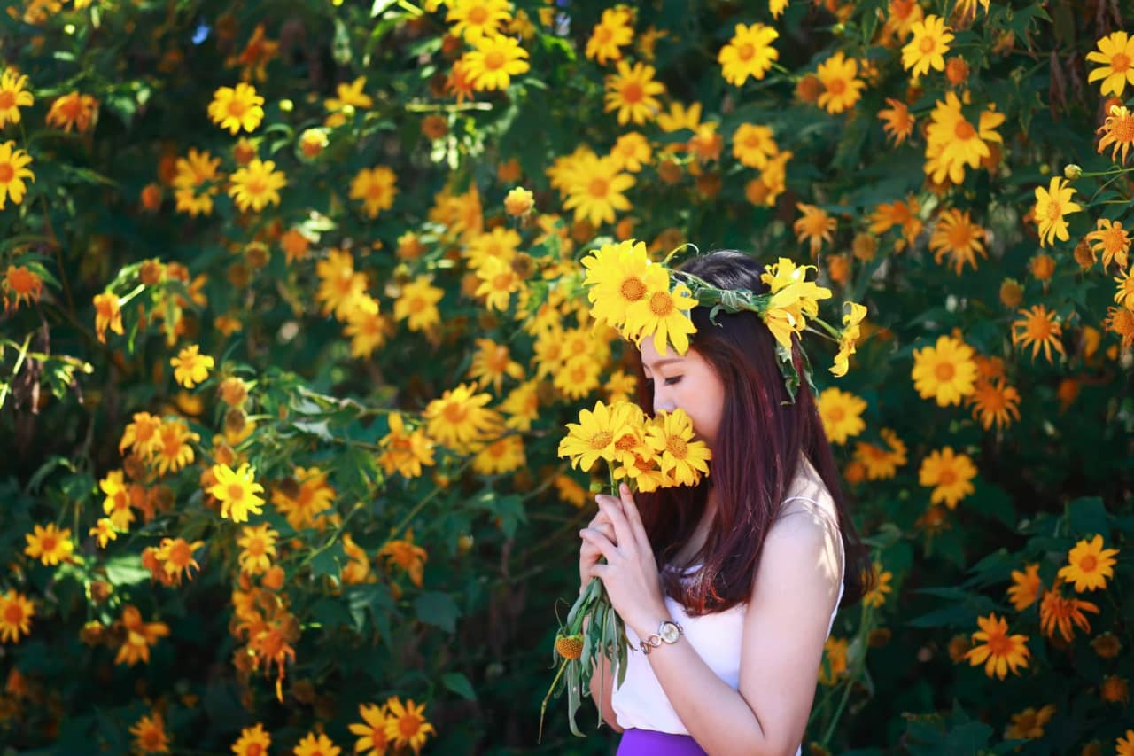 Hoa dã quỳ tên tiếng anh Mexican Sunflower weed