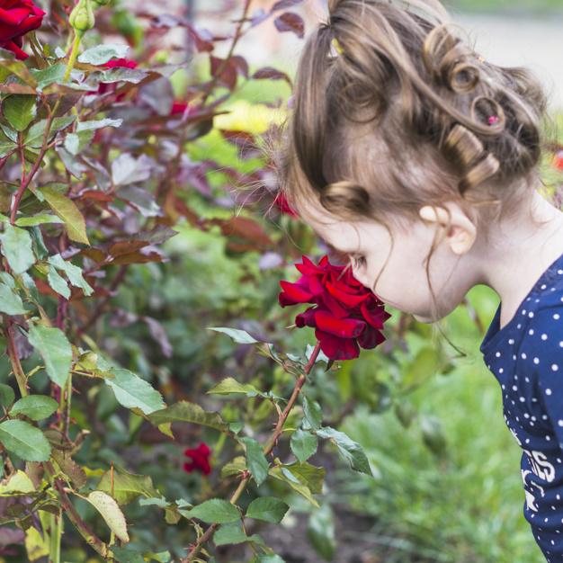 Sự tích hoa hồng đỏ mọc gai nhọn để học cách yêu thương