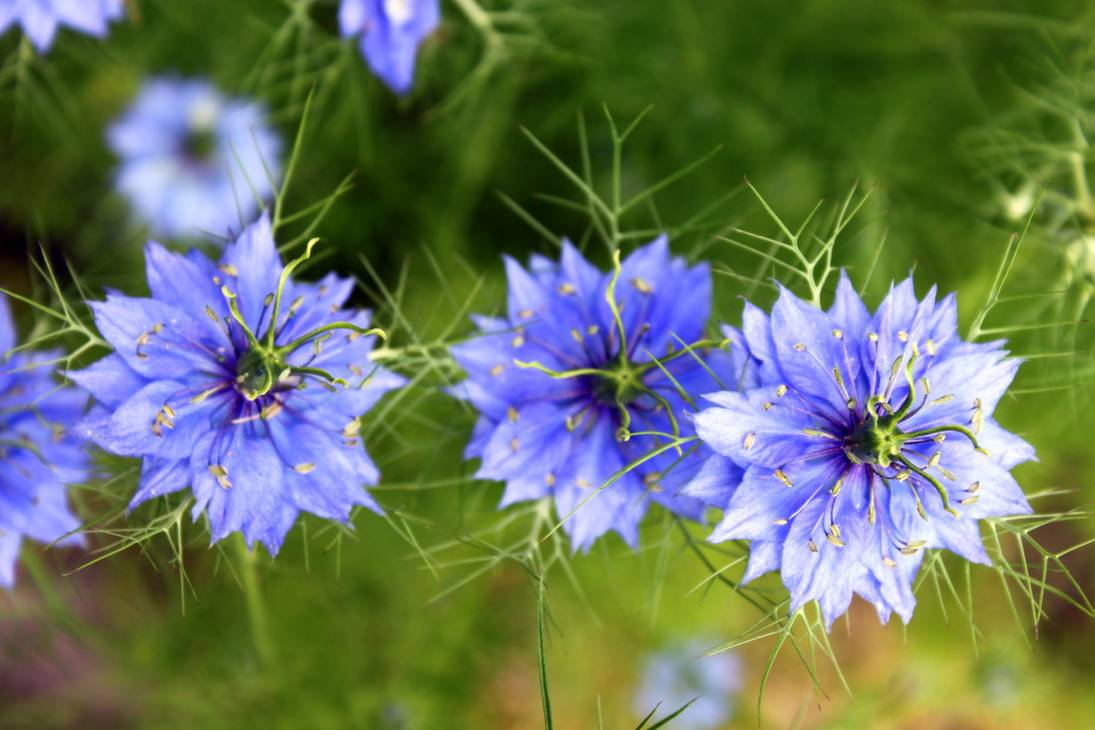 Gieo hạt trong thời gian cuối xuân đầu hè hoặc cuối thu