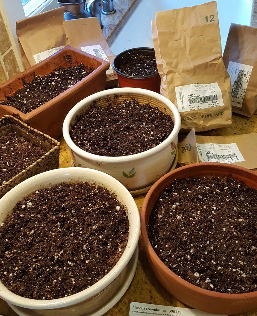 Chọn chậu trồng có độ sâu từ 10-15cm, đường kính 30-40cm và đổ đất vào 2/3 chậu