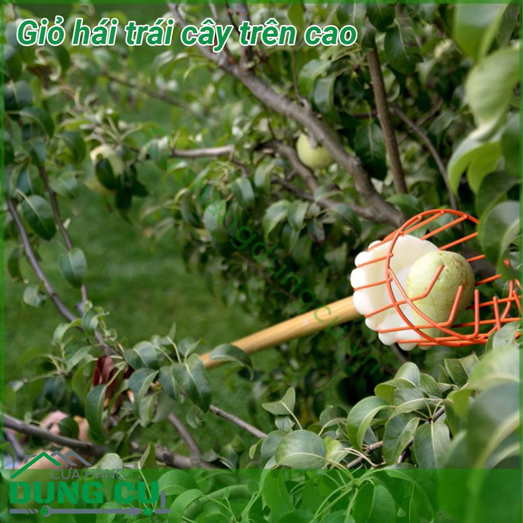 Dụng cụ hái trái cây trên cao Tramontina (không cán gỗ)