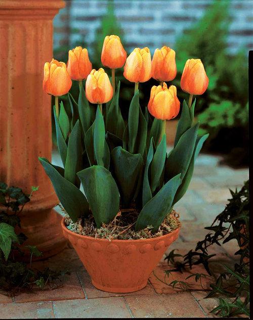 3 loại hoa không nên đặt trong nhà kẻo rước họa vào thân