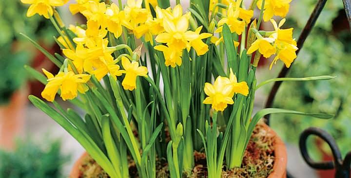 6 loại hoa để bàn làm việc mang may mắn cho người mệnh Thổ