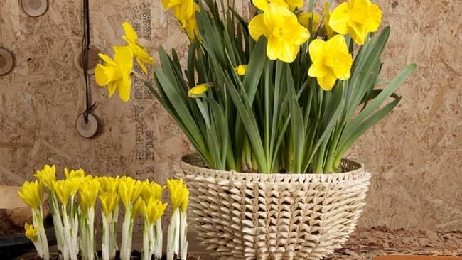 Hoa phòng ngủ hợp ngũ hành vợ chồng trăm năm hạnh phúc