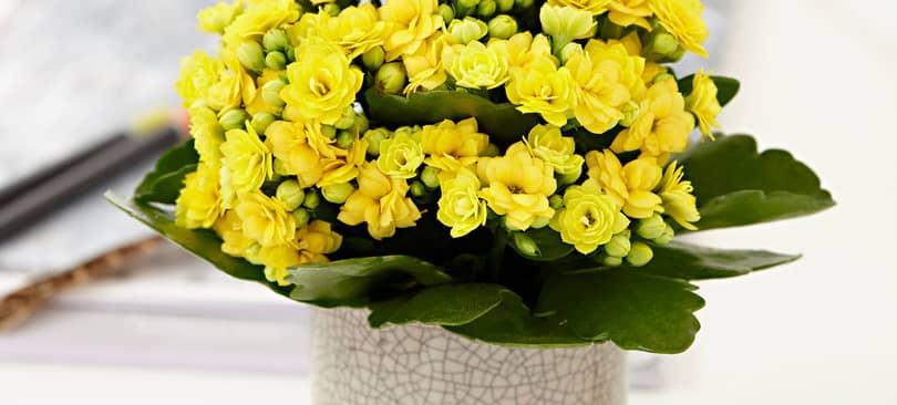 Top 10 loại hoa mang lại phú quý, tài lộc nhất định phải trưng ngày Tết
