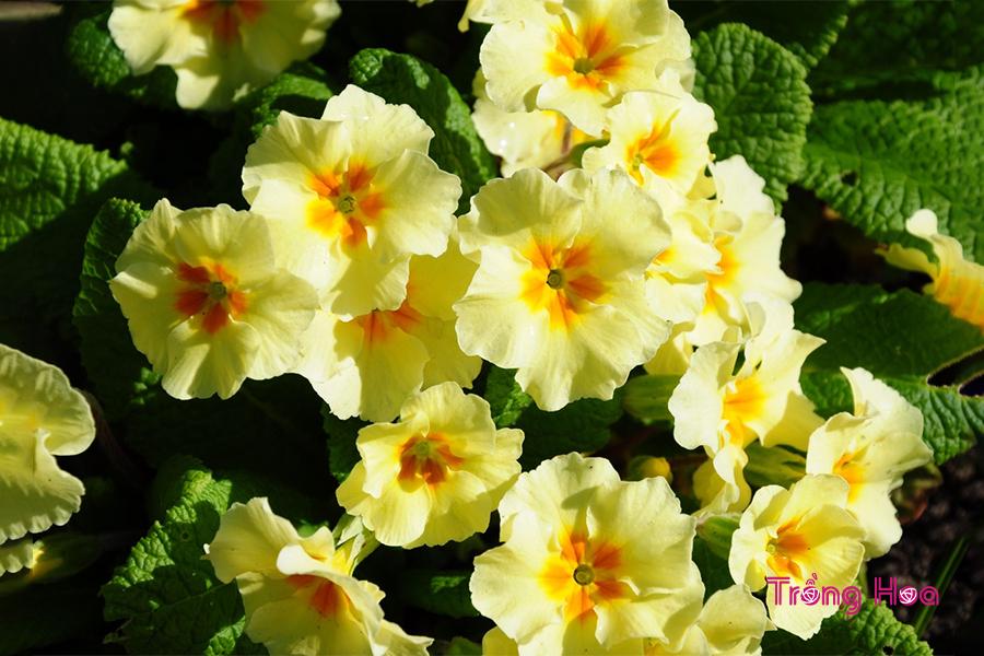 Hoa còn có khả năng loại bỏ khí độc trong nhà, làm sạch không khí