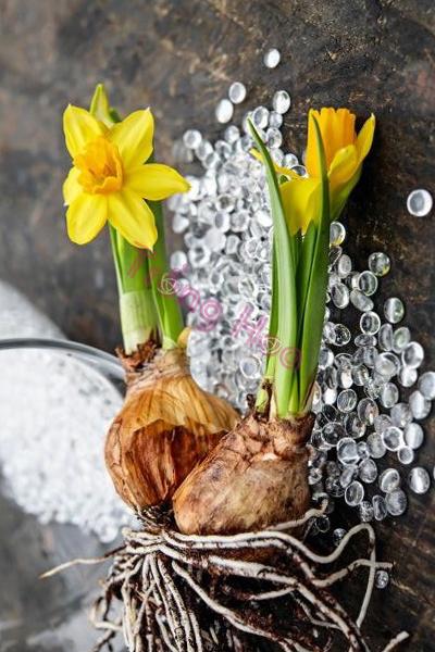 Tiết lộ bí quyết trồng hoa đảm bảo hoa nở đẹp đúng dịp Tết