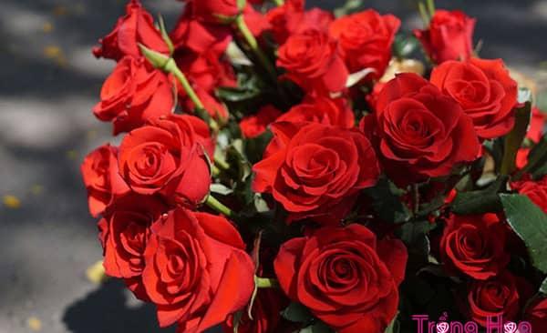 Cách cắm hoa Hồng trên bàn thờ và những điều cần lưu ý