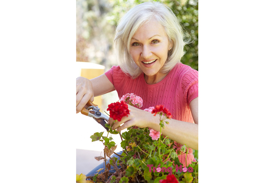 Bí kíp cắt tỉa hoa phong lữ thảo