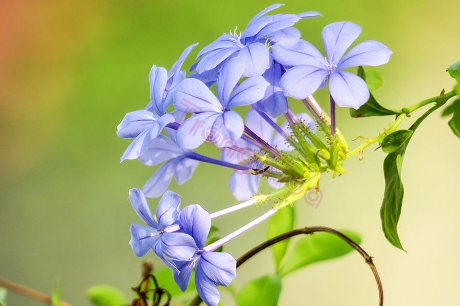 Bật mí kỹ năng cắt tỉa hoa thanh xà kích thích tăng trưởng mùa mới
