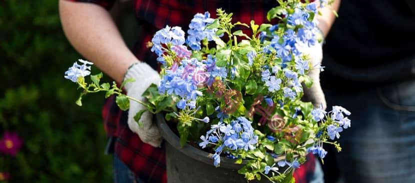 Kỹ năng cắt tỉa hoa thanh xà kích thích tăng trưởng
