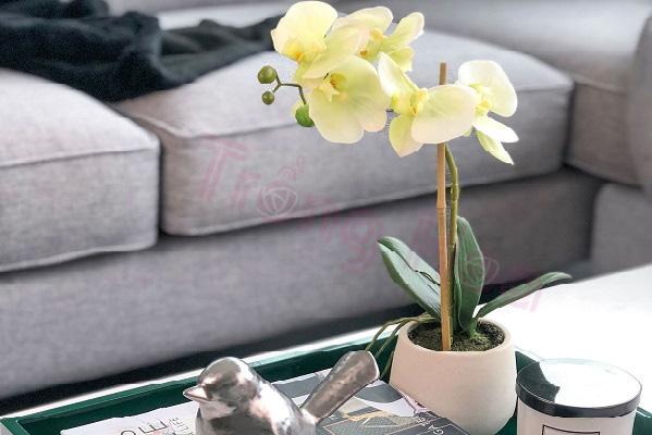 Top 5 chậu hoa ngày Tết đẹp rực rỡ mang lộc lá đầy nhà