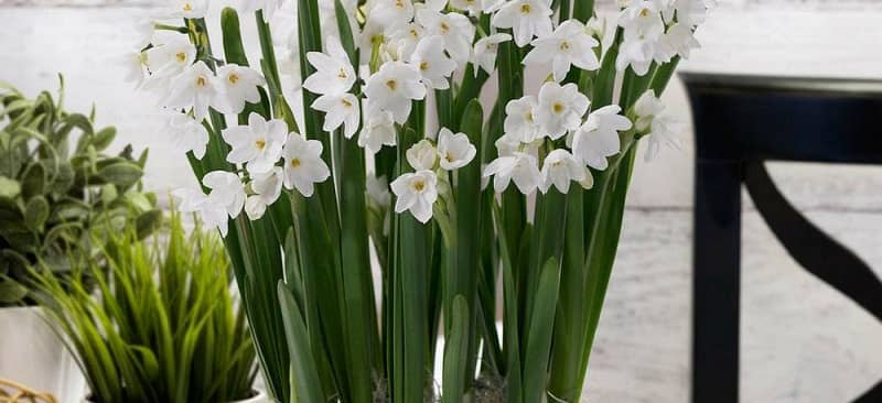 Top 3 loại hoa mang tài lộc ngày tết
