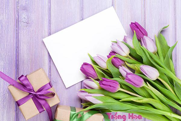 Tiết lộ bí quyết chọn 9 loại hoa ngày Tết tuyệt đẹp, tươi lâu